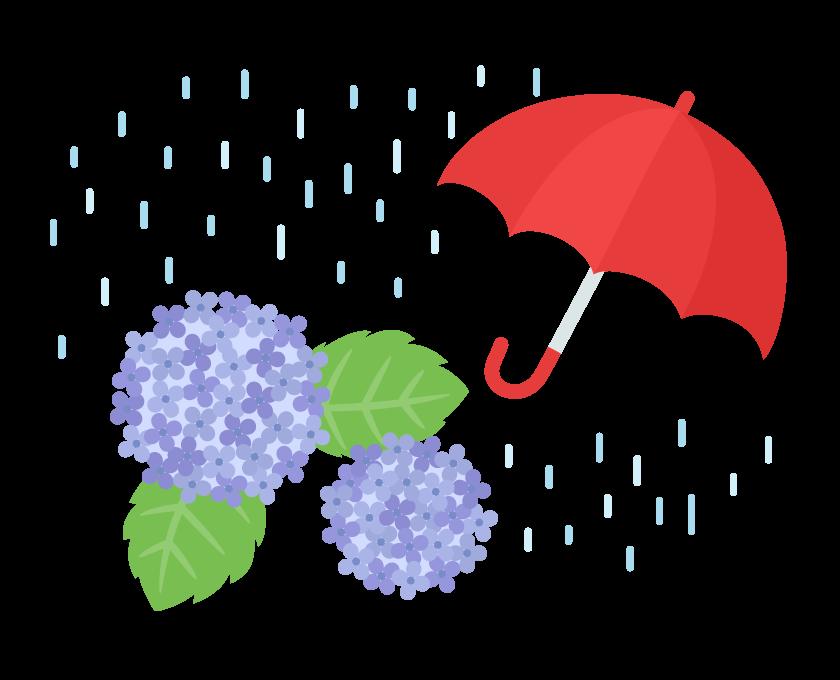 雨とアジサイ